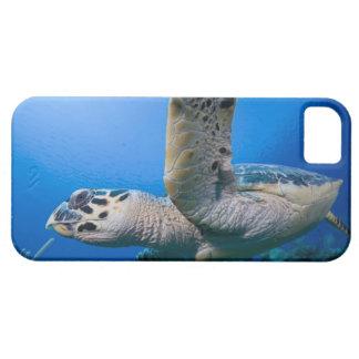 Cayman Islands, Little Cayman Island, Underwater iPhone 5 Cover