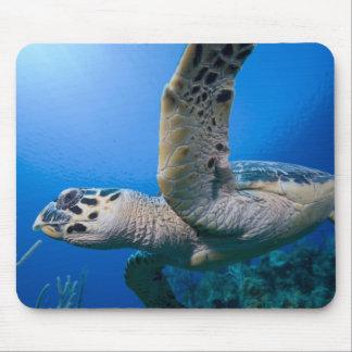 Cayman Islands, Little Cayman Island, Underwater Mouse Mat
