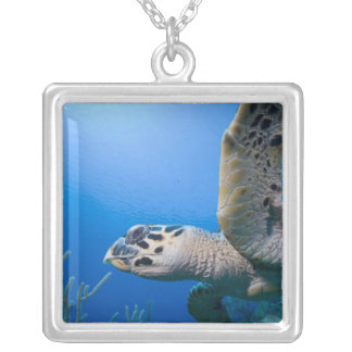 Cayman Islands, Little Cayman Island, Underwater Silver Plated Necklace