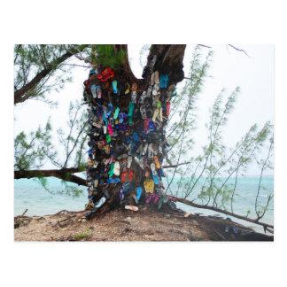 Cayman Islands : shoe tree by ocean Postcard