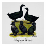 Cayuga Duck Family Poster