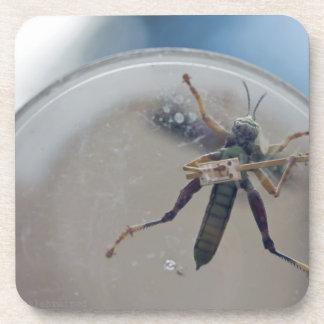 CBG Grasshopper Coaster
