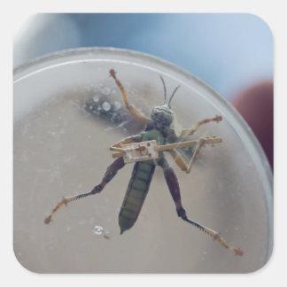CBG Grasshopper Square Sticker