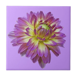 CC- Purple Dahlia Floral Art Tile