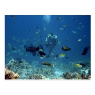 Cebu Diving.jpg Postcard