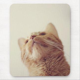Cecil 1 mousepads
