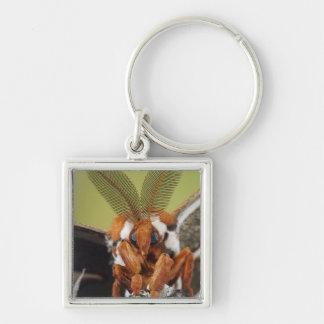 Cecropia Moth, Hyalophora cecropia, adult Silver-Colored Square Key Ring