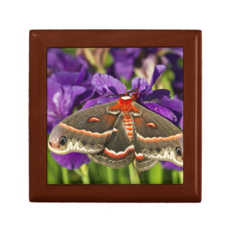 Cecropia Moth in flower garden Gift Box