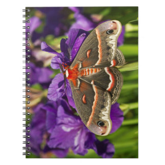 Cecropia Moth in flower garden Notebook