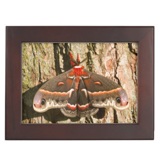 Cecropia Moth on tree trunk Keepsake Box