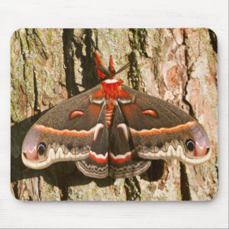 Cecropia Moth on tree trunk Mouse Pad