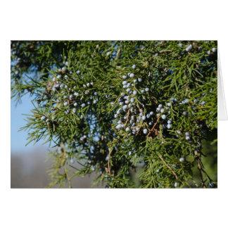 Cedar Berry Christmas Card