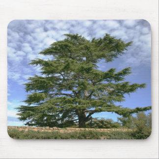 Cedar of Lebanon Mouse Pads