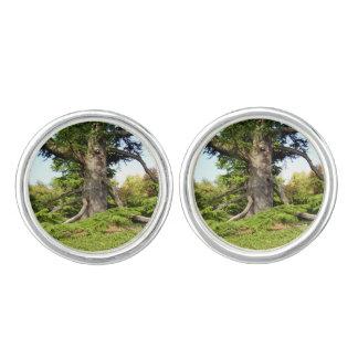 Cedar-of-Lebanon Tree Cufflinks