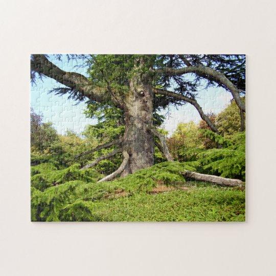 Cedar-of-Lebanon Tree Photo Puzzle with Gift Box