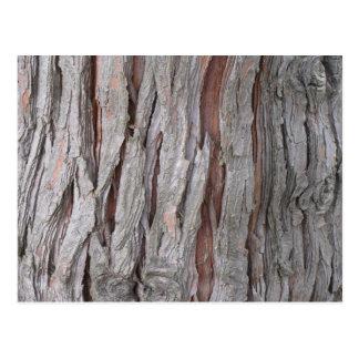 Cedar tree bark texture postcard