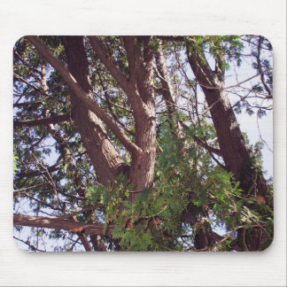 Cedar Tree in Morning Sunshine  -Limbs and Trunk Mouse Pad