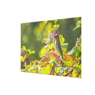 Cedar Waxwing  And Poke Berries On A Tree Canvas Print