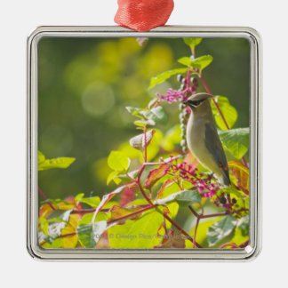 Cedar Waxwing  And Poke Berries On A Tree Christmas Ornament