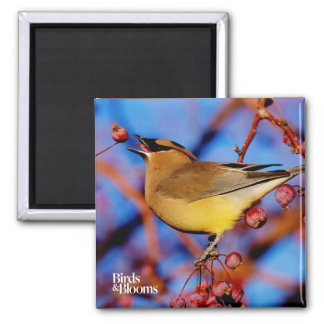 Cedar Waxwing 2 Inch Square Magnet