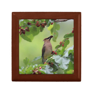 Cedar Waxwing Small Square Gift Box