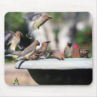 Cedar Waxwings at Bird Bath Mousepad