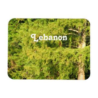 Cedars of Lebanon Magnet