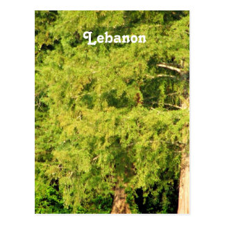 Cedars of Lebanon Postcard