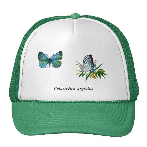 Celastrina argiolus (male) hat