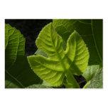 Celeste Baby Fig Leaf ATC Photo Card Business Card Template