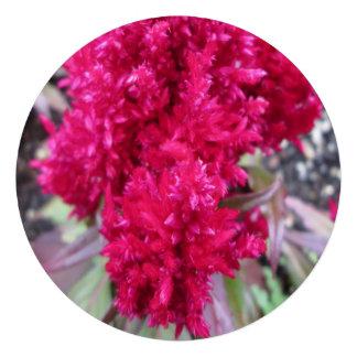 Celosia Red Garden Flower Custom Invitations