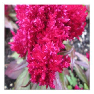 Celosia Red Garden Flower Personalized Invitation