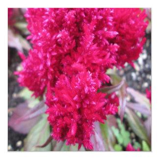 Celosia Red Garden Flower 5.25x5.25 Square Paper Invitation Card