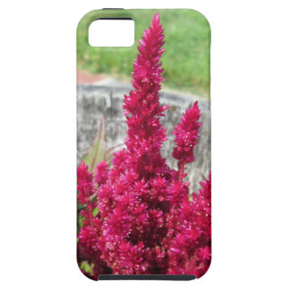 Celosia Red Rustic Fence Garden iPhone 5/5S Cover