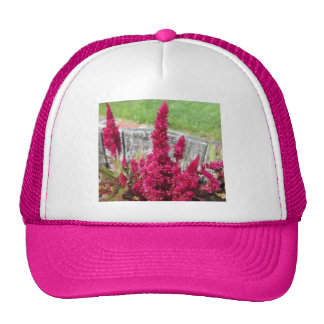 Celosia Red Rustic Fence Garden Hat