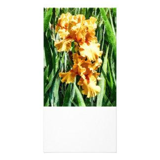 Celtic Glory Irises Photo Cards