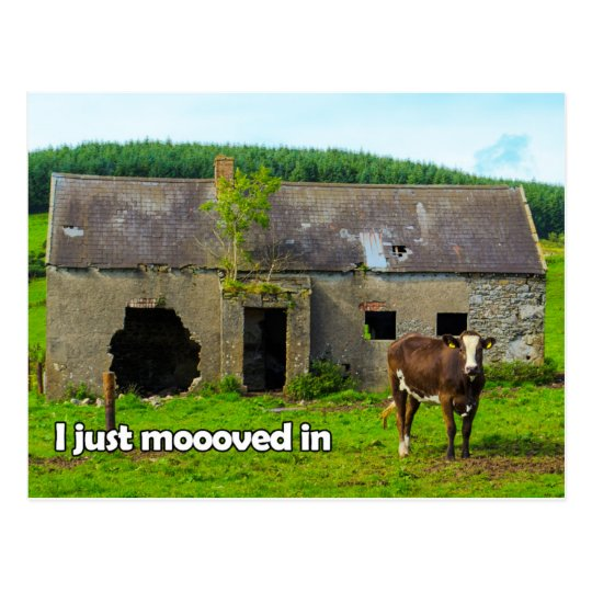 Celtic Ireland I just moooved in cow postcard
