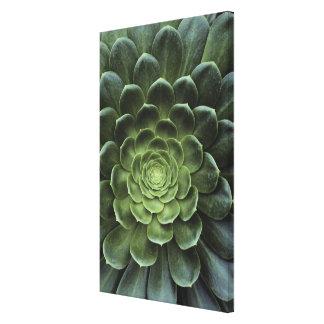 Center of Cactus Canvas Print