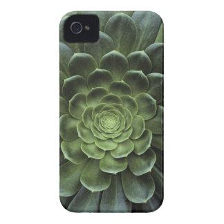 Center of Cactus iPhone 4 Case