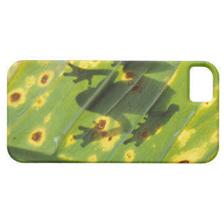 CENTRAL AMERICA, Costa Rica, Back-lit frog on Barely There iPhone 5 Case