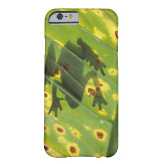 CENTRAL AMERICA, Costa Rica, Back-lit frog on Barely There iPhone 6 Case