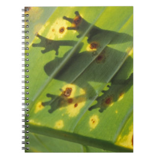 CENTRAL AMERICA, Costa Rica, Back-lit frog on Notebook