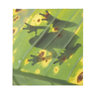 CENTRAL AMERICA, Costa Rica, Back-lit frog on Notepad