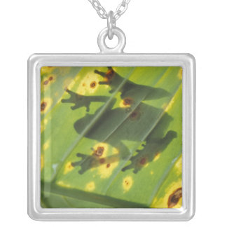 CENTRAL AMERICA, Costa Rica, Back-lit frog on Silver Plated Necklace