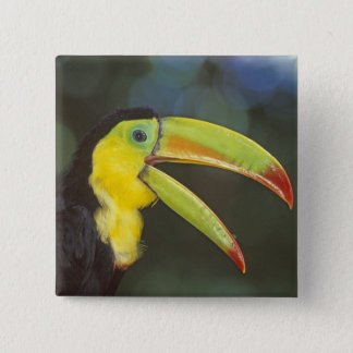 Central America, Costa Rica. Keel-billed 15 Cm Square Badge