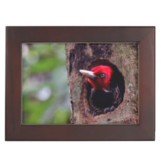 Central America, Costa Rica, Manuel Antonio Keepsake Box