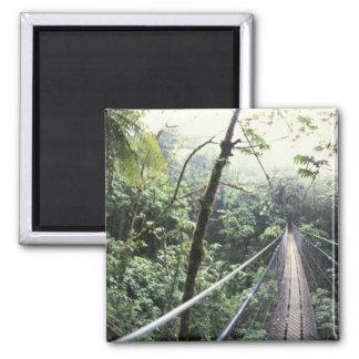 Central America, Costa Rica, Monteverde Cloud Square Magnet