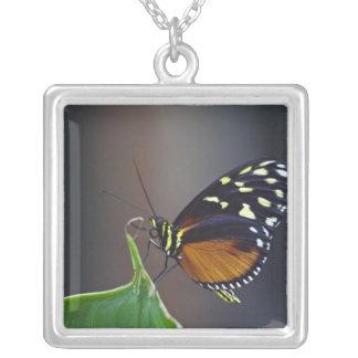Central America, Costa Rica, Selva Verde. 3 Silver Plated Necklace