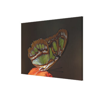 Central America, Costa Rica, Selva Verde. 4 Canvas Print