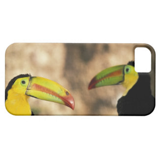 Central America, Honduras. Keel-billed Toucan 2 iPhone 5 Case